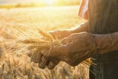 Forza Nuova e Sinlai: «Pronti a manifestare con gli agricoltori di San Ferdinando»