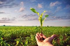 Regione Puglia, al via il primo bando per agricoltura biologica
