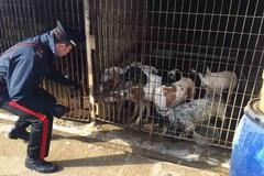 Cani malnutriti e feriti, scoperto a San Ferdinando di Puglia un canile abusivo