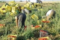 """Lavoratori in """"nero"""" scoperti nelle campagne di San Ferdinando di Puglia"""