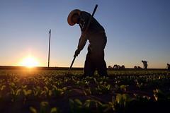 Vertenza agricola, domani si torna a scioperare a San Ferdinando