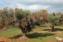 Gelate, protesta degli agricoltori domani a Bari