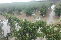 """CIA Puglia: """"Agosto nero per l'agricoltura, campagna vitivinicola a rischio"""""""