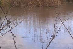 Fiume Ofanto in piena, l'acqua a tratti supera gli argini. Non è straripato