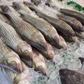 Prodotti ittici: in Puglia stranieri 8 pesci su 10 consumati