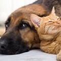 «Una cena per chi adotta cani o gatti», l'idea di un ristoratore a San Ferdinando di Puglia