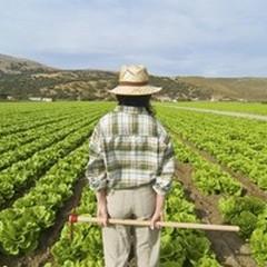 Nuovo bando per i giovani in agricoltura