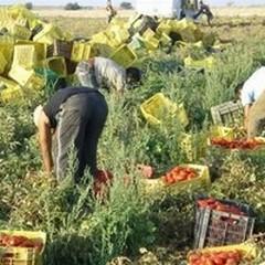 Caporalato, Coldiretti: «Un quarto dell'agricoltura dipende dal lavoro degli stranieri»