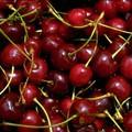 In Puglia le ciliege arriveranno con tre mesi di anticipo