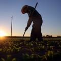 Aumentano del 6,6% le imprese agricole under 35 in Puglia