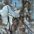 San Ferdinando di Puglia è tra le città più colpite dalle gelate dell'inverno 2018