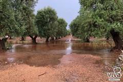 Manovra, Coldiretti: per privatizzazione oltre 100 mila metri quadri disponibili nella Bat