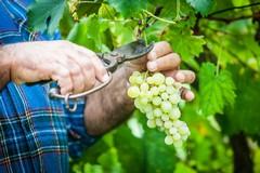 Agricoltura, prorogati a fine luglio i permessi di soggiorno per i lavoratori extracomunitari
