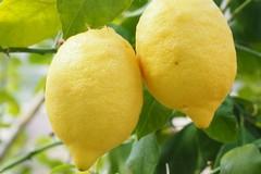 Vendita agrumi: prezzi stracciati dalla grande distribuzione