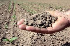 In Puglia si raggiungono i 40 gradi, Coldiretti: «Allarme siccità»