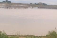 Fiume Ofanto, ripreso il suo naturale corso. Esondazione colpisce vigne abusive