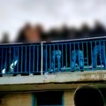 Sospesa per disordini fra tifosi la partita Virtus San Ferdinando - Idea Bari