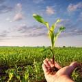 PSR, in Commissione agricoltura lo stato di attuazione e risorse a disposizione