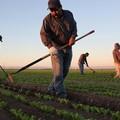 Agricoltori e imprese del settore non possono permettersi perdita finanziamenti Psr
