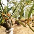 Caldo eccessivo e siccità, agricoltura in allarme