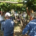 Proclamato lo sciopero per gli operai del settore agricolo e florovivaistico